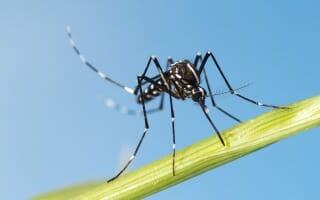 Traitement des moustiques tigres Bas-Rhin