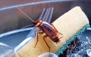 Désinsectisation des cafards et blattes Bas-Rhin