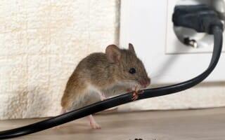 Dératisation Rats & Souris Colmar