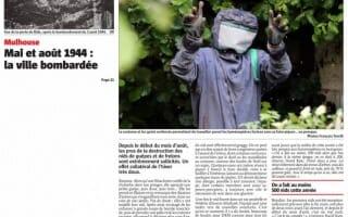 Le rush estival des guêpes et des frelons DKM Experts dans L'Alsace Mulhouse