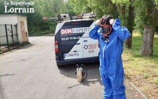 Traitement anti-Puce avec DKM Experts dans le Journal Le Républicain Lorrain