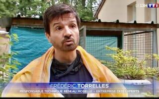 Journal TV de TF1 / DKM Experts contre la prolifération et la destruction des nids de chenilles processionnaires