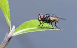 Désinsectisation des mouches Bas-Rhin