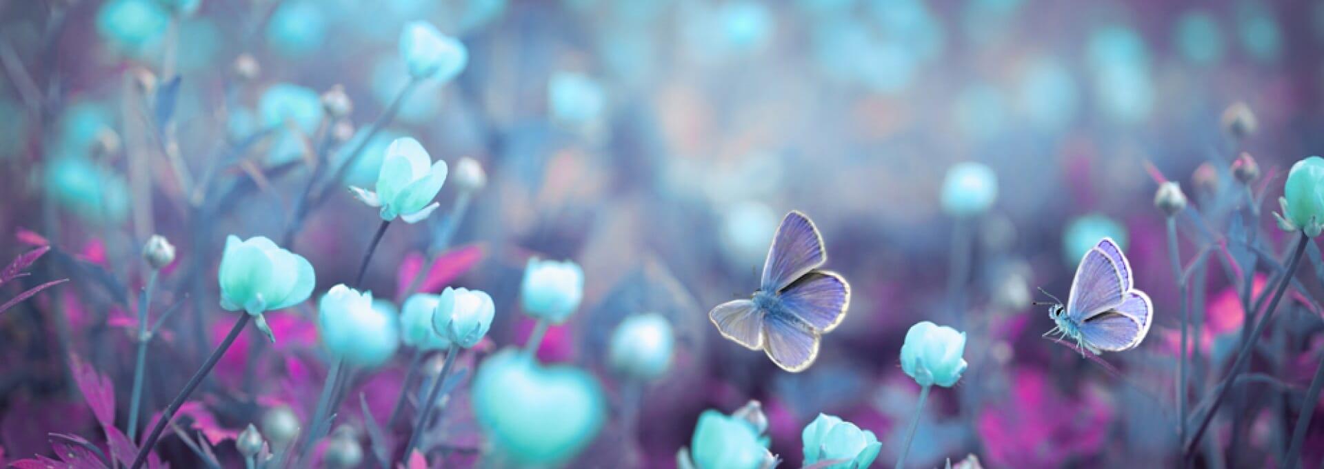 papilon hiver