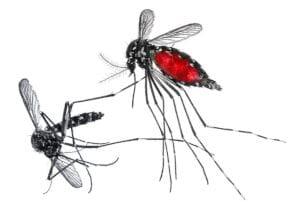 traitement moustique tigre à Tassin la Demi Lune